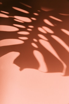 Abstract background of shadows palm leaves on a pink wall