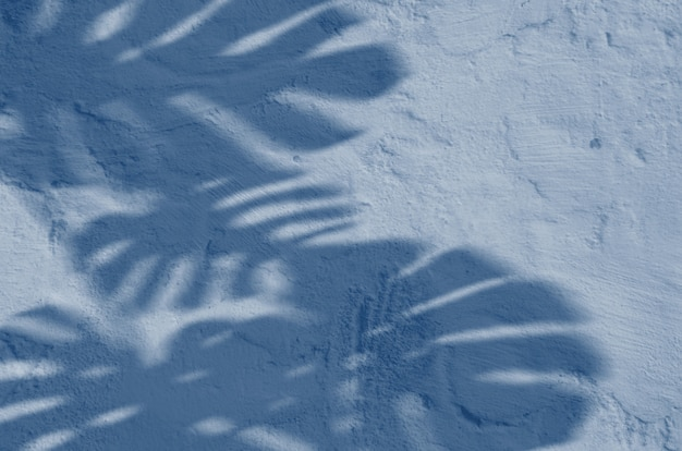 Abstract background textuer of shadows leaf on a concrete wall. classic blue color. color of the year 2020.