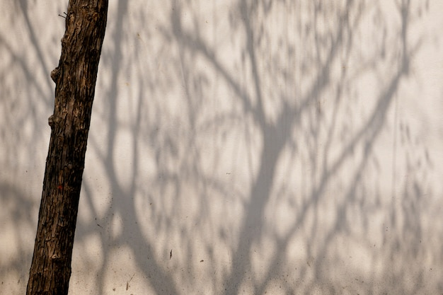 Abstract background textuer of shadows leaf on a concrete wall