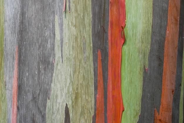 レインボーユーカリの抽象的な背景テクスチャ樹皮