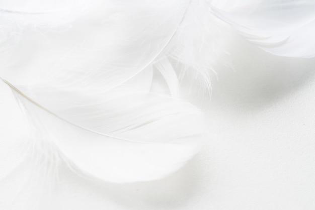 抽象的な背景。テクスチャ。黒と白のふわふわの鳥の羽の背景