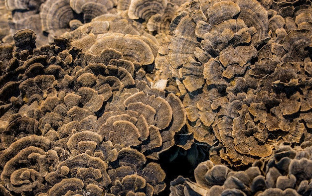 Abstract background and texture of mushroom surface.