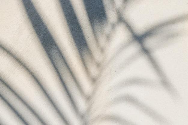 コンクリートの壁に影の葉の抽象的な背景テクスチャ