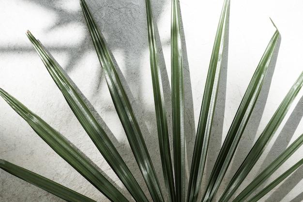 コンクリートの壁にヤシの葉の影の抽象的な背景テクスチャ