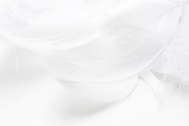 抽象的な背景。テクスチャー。パステルカラーのふわふわ鳥の羽の背景