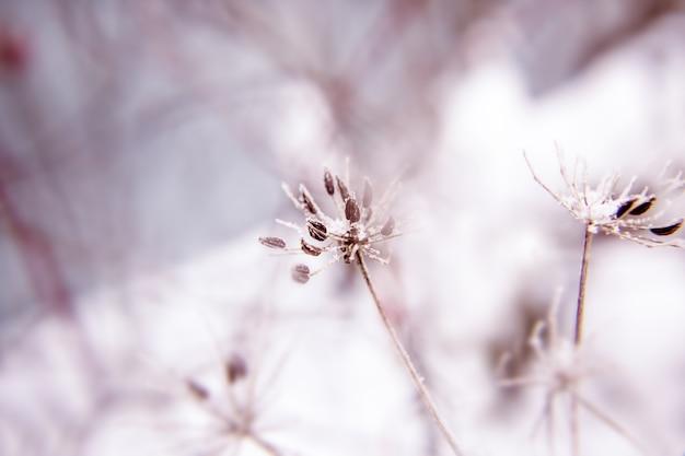 乾燥した牧草地の花とタンポポの枝と抽象的な背景