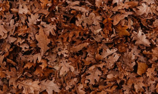 抽象的な美しいニュートラルな背景オークと木の秋のオレンジ色の乾燥した落ち葉