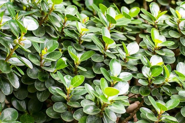 自然の背景、葉の緑の葉の抽象的な美しいテクスチャ