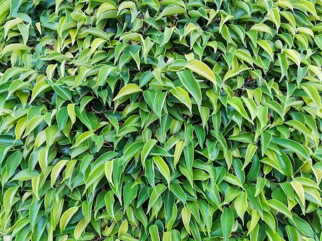 自然の背景に緑の葉の抽象的な美しい質感