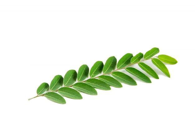 白い背景の上の緑の葉の抽象的な美しいテクスチャの葉