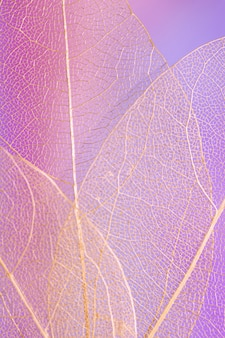 Abstract beautiful transparent purple leaf