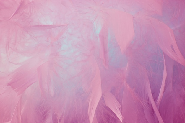 Abstract beautyful pink and blue tone feathers background. fluffy feather fashion design vintage bohemian style pastel texture. wedding, anniversary, valentine's day concept. soft focuse.