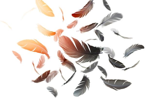 Абстрактные перья черная птица плавающие в воздухе белом фоне перья летающие