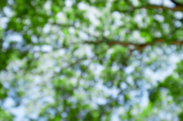 大きな木の枝を抽象的な、緑色の春の葉が付いている古い木のぼかし。リフレッシュと酸素