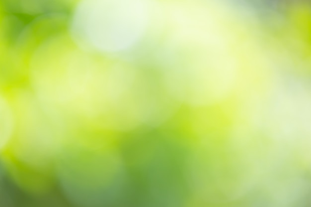 Abstract blur green nature