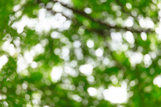 Abstract blur tree leaf