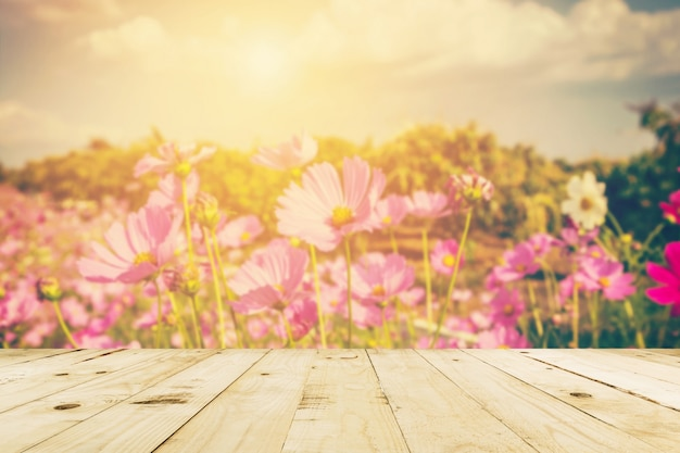 추상 흐리게 코스모스 필드 꽃과 빈티지 톤 햇빛.