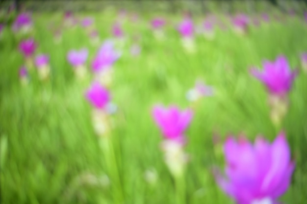 Abstract blurred flower field in nature with tree background.