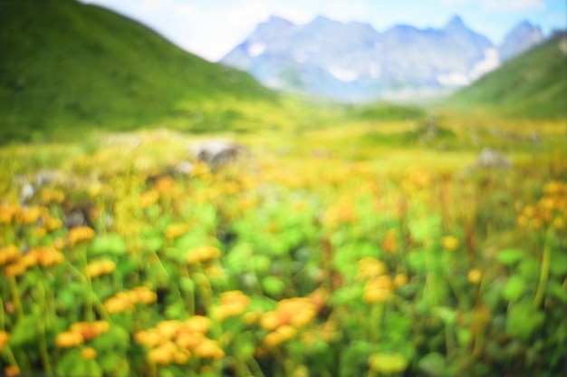 Abstract blurred flower field with mountain nature background.