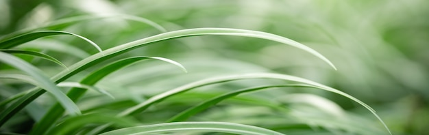 Abstract blurred of green leaf nature using as background natural plants, ecology cover page concept.