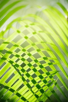 Abstract blurred of green leaf nature