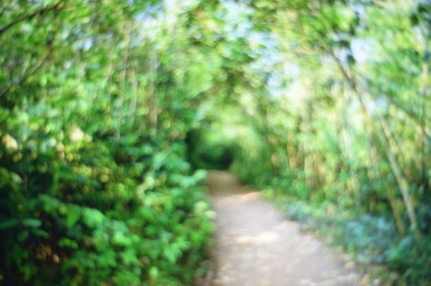 Abstract blurred nature trail forest background.