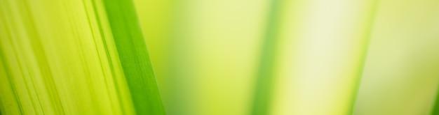 背景の自然植物、生態学の表紙の概念を使用して緑の葉の自然の抽象的なぼやけた。