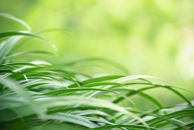 背景として自然植物生態学壁紙ページの概念を使用して緑の葉の自然の抽象的なぼやけた
