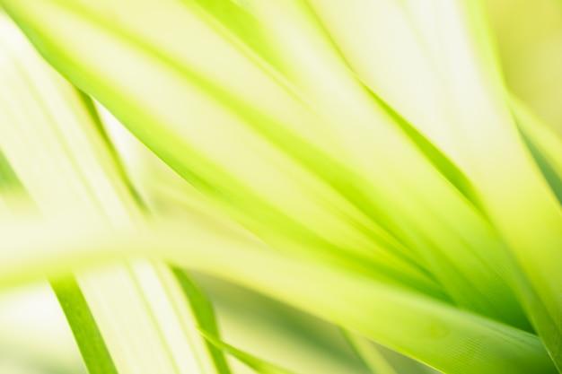 Абстрактный размытый зеленый лист природы, используя в качестве фона естественные растения