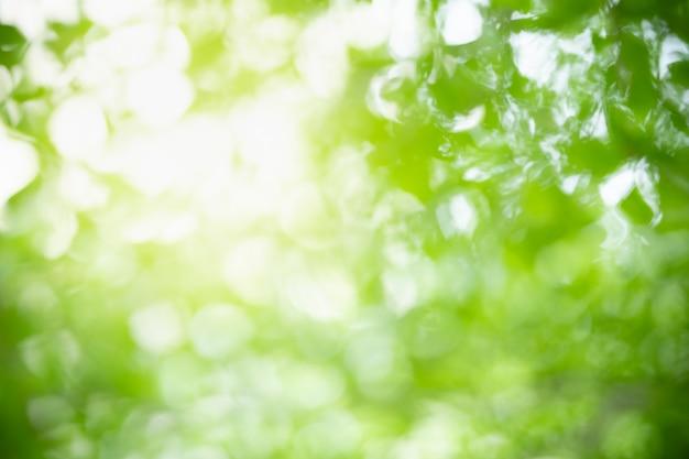 ピントがぼやけてぼやけている抽象的な背景とボケ味と日光の下で緑の葉の自然の背景と背景として自然の植物の風景、生態壁紙のコンセプトを使用してスペースをコピーします。