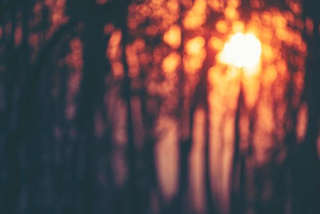森の夕日、木、日光の抽象的なぼやけた背景