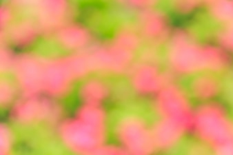 Abstract bokeh and blurred pink and green nature background