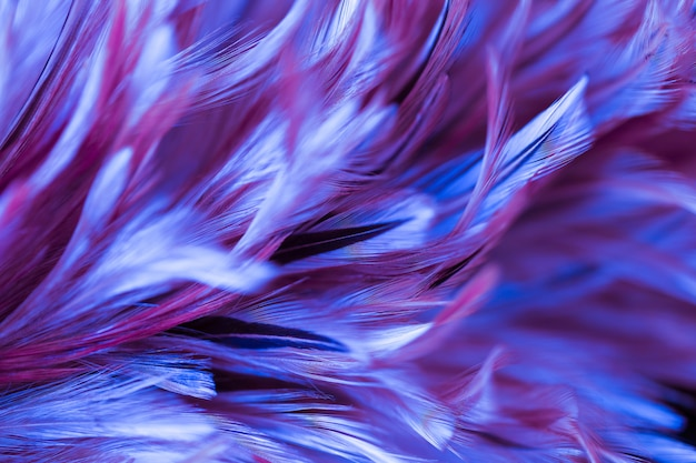 Abstract chicken feather texture for background, soft color and blur style