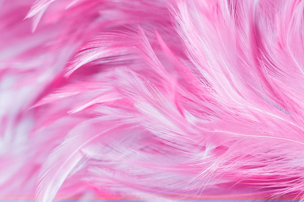 Abstract chickens feather texture for background