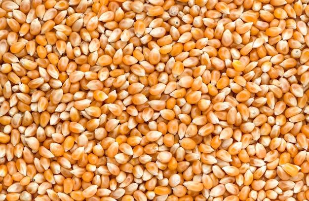 추상 옥수수 씨앗 질감 배경