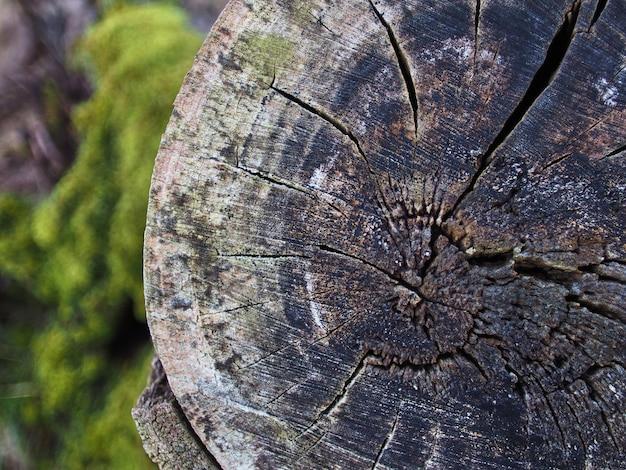 Абстрактный срезанный ствол дерева с лишайниками