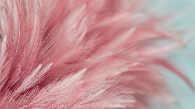 Abstract feather for the background