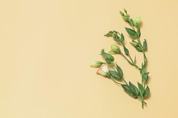 추상 꽃 배경입니다. 파스텔 노란색 배경에 부드러운 녹색 꽃의 가지. 평평한 평지, 평면도, 복사 공간