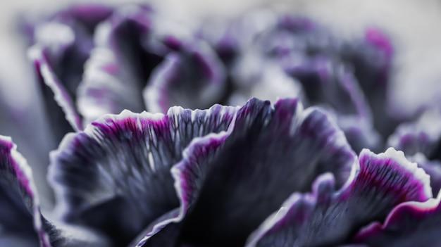 휴가 브랜드 디자인을 위한 추상 꽃 배경 검은 카네이션 꽃 매크로 꽃 배경