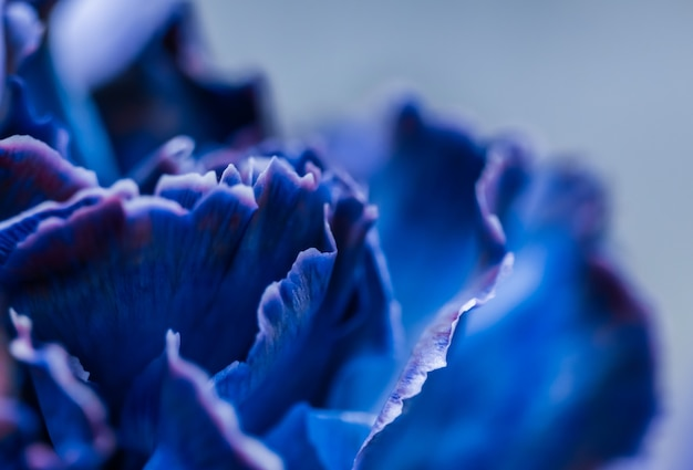 Abstract floral background blue carnation flower macro flowers backdrop for holiday brand design