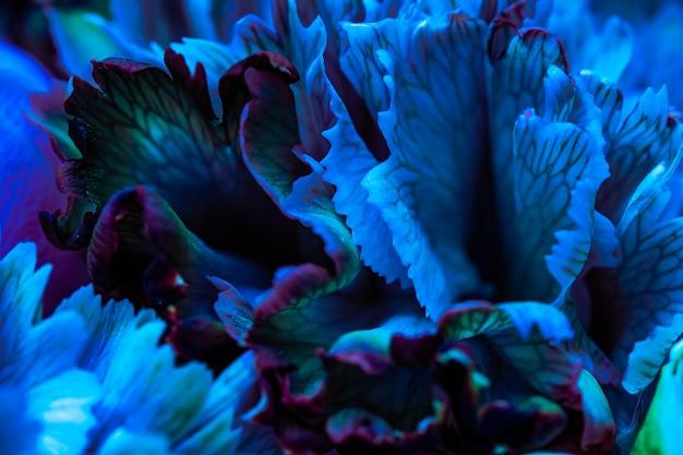 추상 꽃 배경 블루 카네이션 꽃 꽃잎 매크로 꽃 배경 휴일 디자인