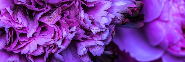 추상 꽃 배경 파란색 카네이션 꽃 꽃잎 매크로 꽃 배경 휴일 디자인