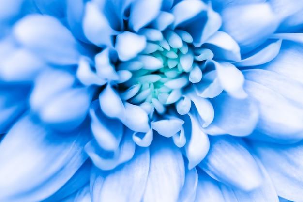 Абстрактный цветочный фон синий цветок хризантемы макро цветы фон для праздника дизайн бренда