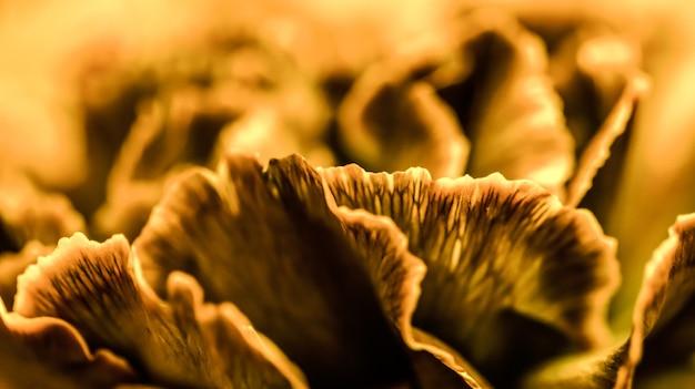 Абстрактный цветочный фон оранжевый цветок гвоздики макро цветы фон для праздника дизайн бренда