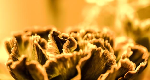 休日のブランドデザインの抽象的な花の背景オレンジカーネーションの花マクロ花の背景