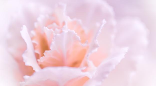 휴일 브랜드에 대 한 추상 꽃 배경 옅은 분홍색 카네이션 꽃 매크로 꽃 배경