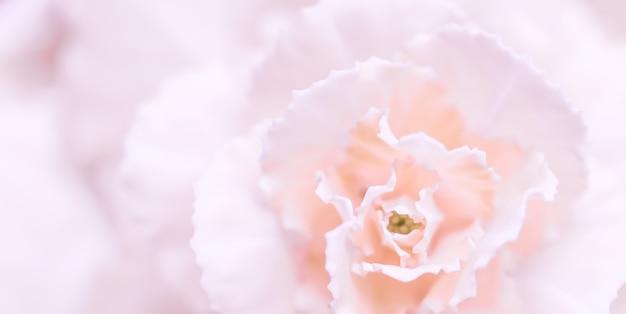 Абстрактный цветочный фон бледно-розовый цветок гвоздики макро цветы фон для праздника бренда
