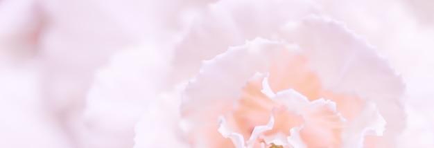 休日のブランドのための抽象的な花の背景淡いピンクのカーネーションの花マクロ花の背景