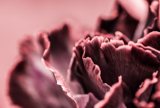 Абстрактный цветочный фон розовая гвоздика цветок макро цветы фон для праздника дизайн бренда