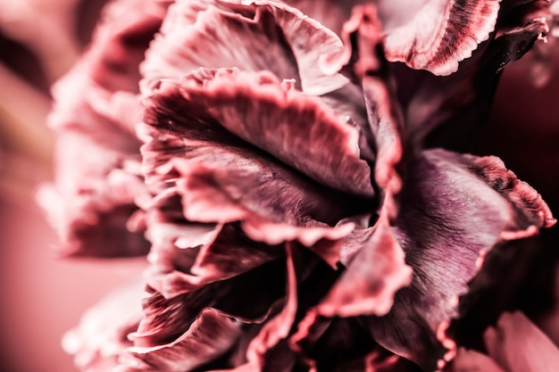 Abstract floral background pink carnation flower macro flowers backdrop for holiday brand design